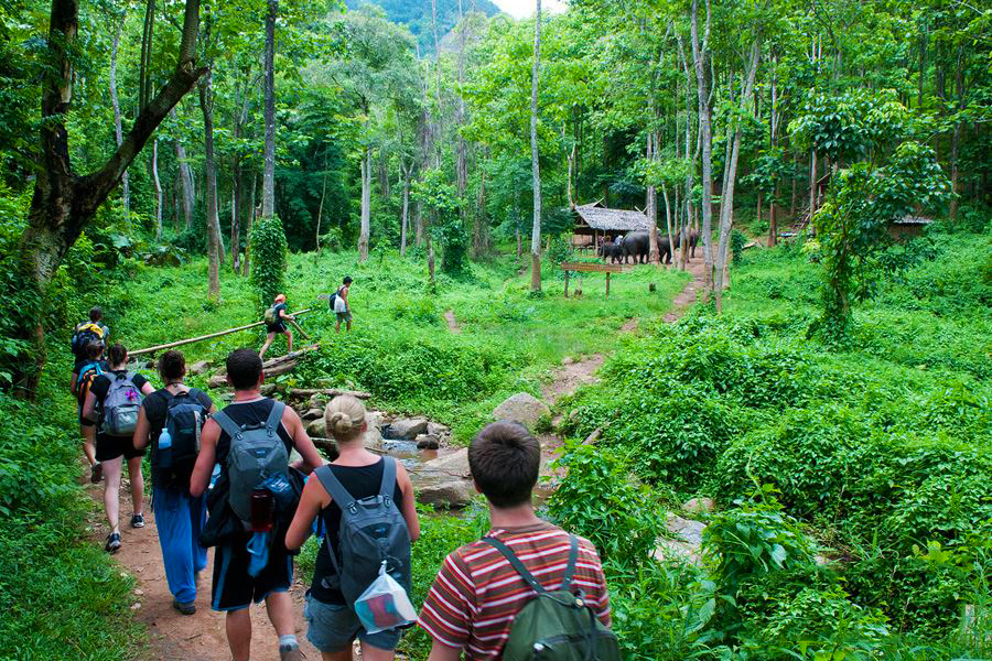 The Complete Guide to Trek in Cuc Phuong National Park, Vietnam